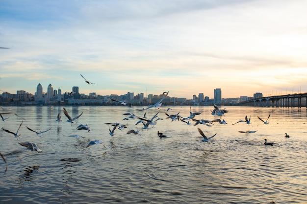 Um bando de gaivotas nas margens do rio da cidade. Foto Premium