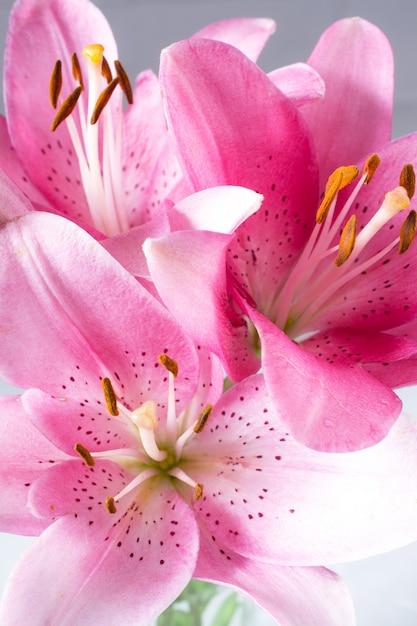 Um buquê de lírios rosa luz sobre fundo branco. Foto Premium