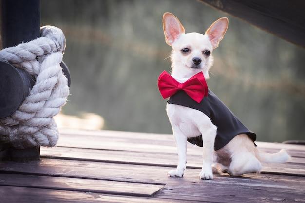 Um cachorro em roupas da moda. Foto Premium