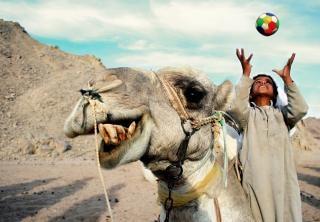 Um camelo feliz e menino Foto gratuita