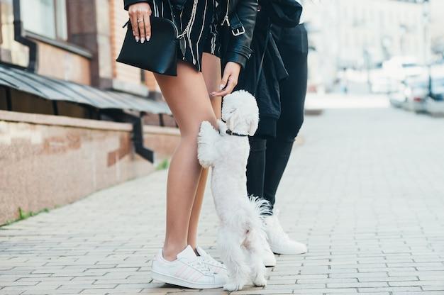 Um cão branco pequeno bonito e pernas de um jovem casal, na rua Foto Premium