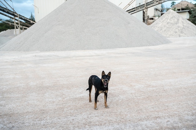 Um cão de fábrica de concreto Foto Premium