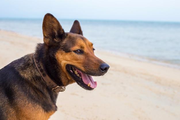 Um cão feliz na praia. Foto Premium