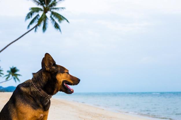 Um cão feliz que relaxa na praia. Foto Premium