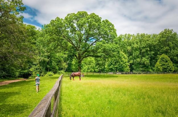 Um cavalo comendo grama no campo, cavalo em um curral comendo grama Foto Premium