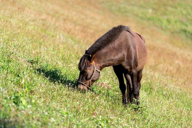 Um cavalo marrom e magro está de pé em um campo com grama verde. Foto Premium