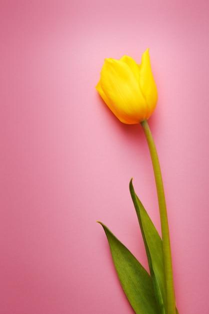 Um close-up tulipa amarela linda Foto Premium