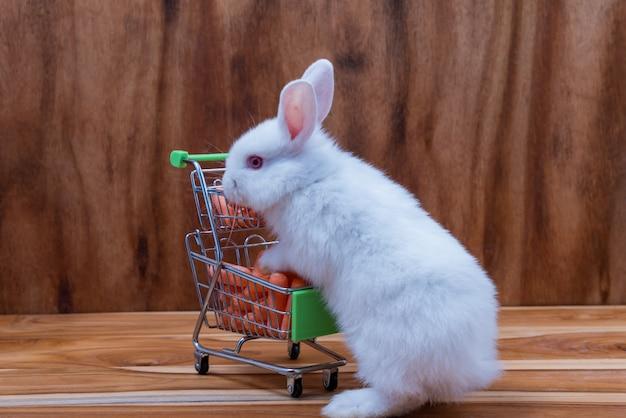 Um coelho pequeno com pele branca, orelhas longas em um assoalho de madeira. Foto Premium