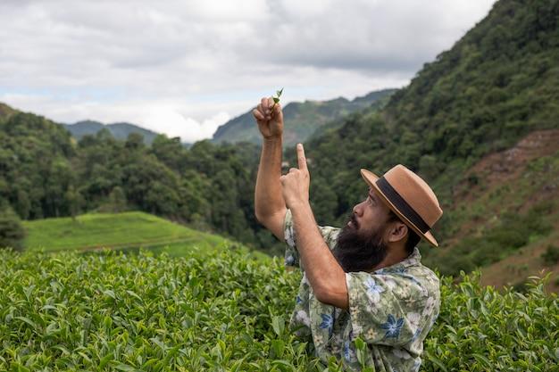 Um fazendeiro masculino com uma barba verifica o chá na exploração agrícola. Foto gratuita