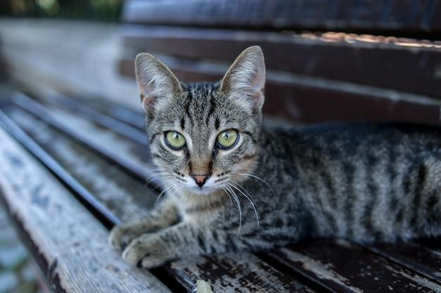 Um gatinho listrado pequeno em um banco. peru. istambul Foto Premium