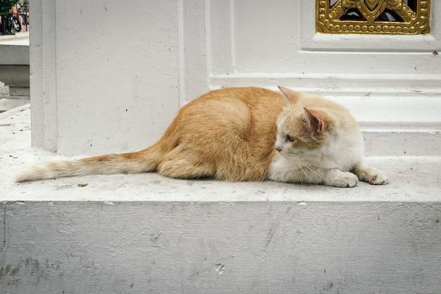 Um gato adorável Foto gratuita
