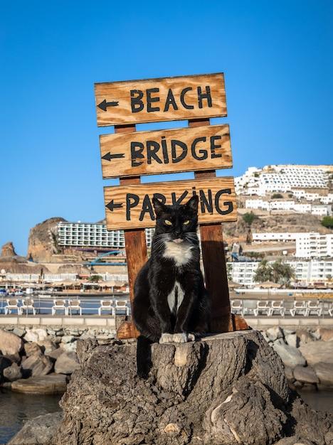 Um gato de rua posando em um tronco de árvore na frente de uma placa apontando para a praia em porto rico, gran canaria na espanha Foto Premium