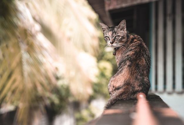 Um gato doméstico adorável com a cor do leopardo que senta-se em cima da muro na casa. Foto Premium