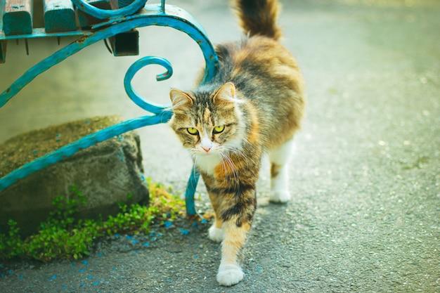 Um gato doméstico fofo fofo marrom branco cinzento ao ar livre ou parque Foto gratuita