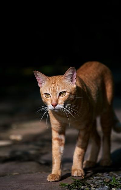 Um gato malhado de rua caminhando sozinho Foto Premium