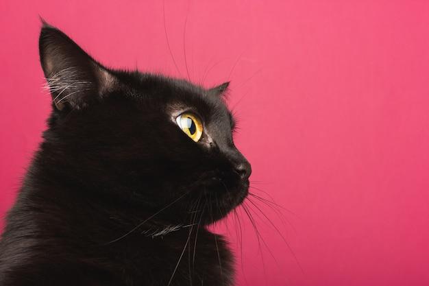 Um gato preto senta-se no perfil, olha em volta em choque Foto Premium