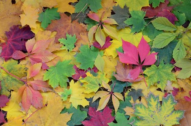 Um grande número de folhas de outono caídas e amareladas Foto Premium