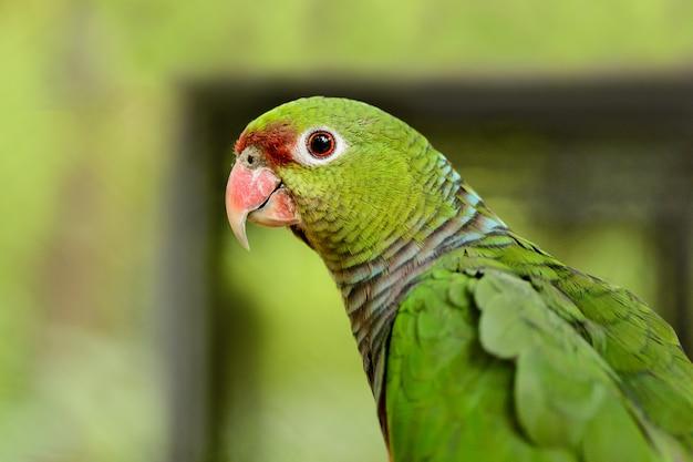 Um, grande, papagaio verde, close-up Foto Premium
