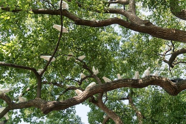 Um, grupo, de, pombos brancos, em, a, árvore Foto Premium