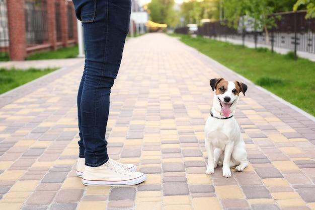 Um homem e um cachorro passear no parque. esportes com animais de estimação. animais de fitness. o proprietário e jack russell estão andando na rua, um cachorro obediente. Foto Premium