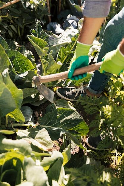 Um, jardineiro, trabalhando, em, a, jardim vegetal, com, enxada Foto gratuita
