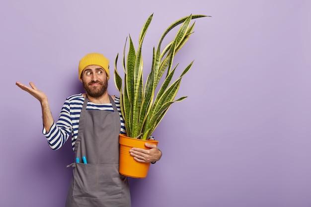 Um jovem florista confuso cultiva a planta da casa, levanta as palmas com hesitação, pensa em como fertilizar a sansevieria Foto gratuita