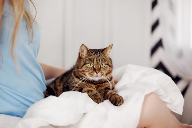 Um lindo gato malhado está deitado no colo de uma mulher Foto Premium
