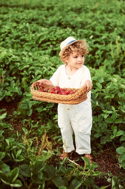 Um lindo menino bonito com uma cesta de morangos reúne uma nova colheita ao ar livre no campo verde Foto Premium