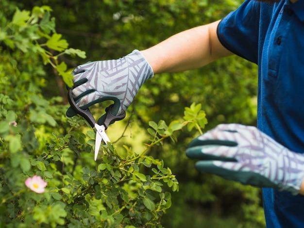 Um, macho, jardineiro, poda, espinhoso, planta Foto gratuita