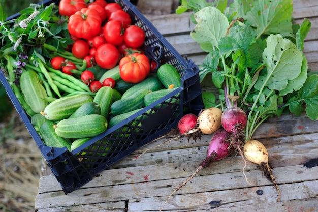 Um monte de rabanetes orgânicos frescos e uma cesta com pepinos, tomates, feijão e ervas Foto Premium