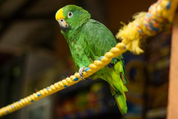 Um papagaio em uma corda Foto Premium