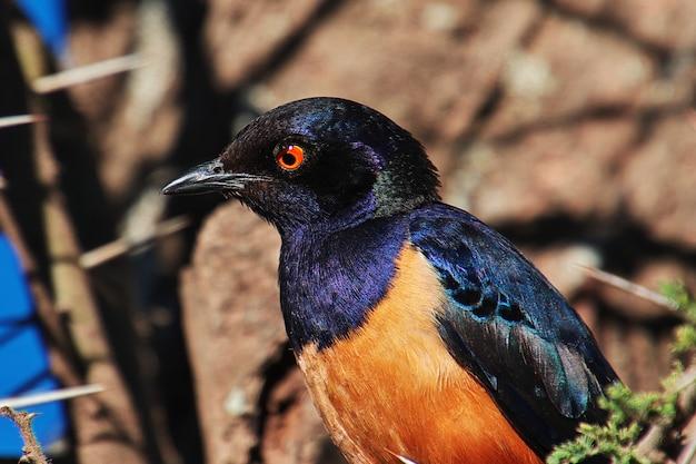Um pássaro no safari no quênia e na tanzânia, áfrica Foto Premium