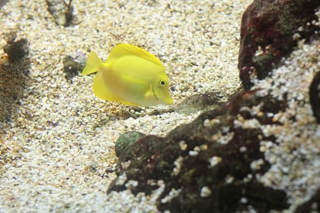 Um peixe no aquário Foto Premium