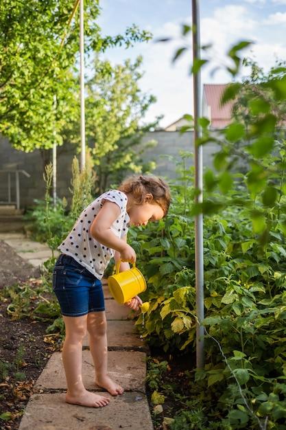 Um pequeno ajudante no jardim regando arbustos de framboesa com um regador amarelo ao pôr do sol Foto Premium