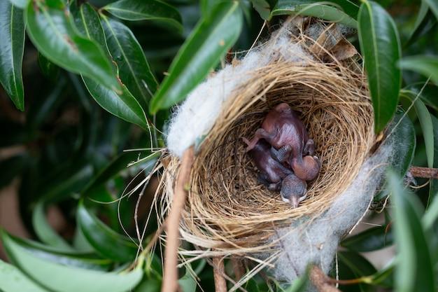 Um pequeno pássaro no ninho em uma árvore. Foto gratuita