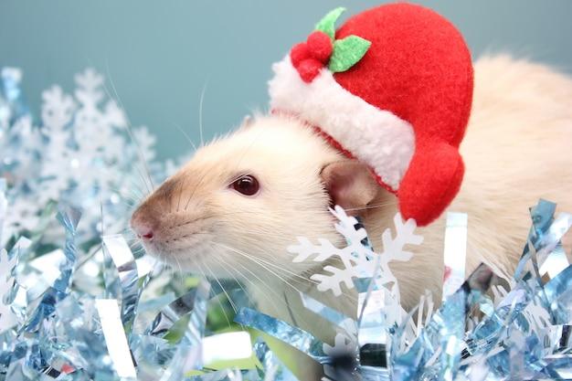 Um rato com um chapéu de natal e entre o enfeites de natal. feliz ano novo de rato 2020 no calendário chinês. Foto Premium