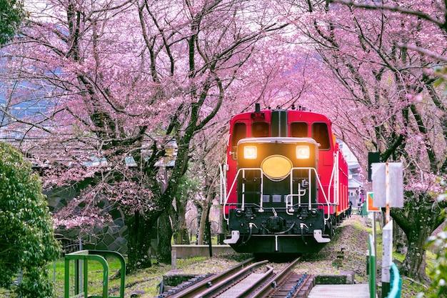 Um trem romântico atravessa um túnel de flores de cerejeira em kyoto, japão. Foto gratuita