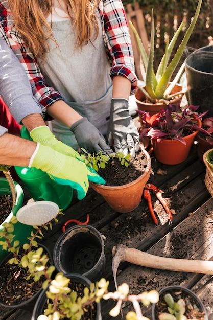 Um, visão aérea, de, macho fêmea, jardineiro, plantar, a, seedling, em, a, pote Foto gratuita