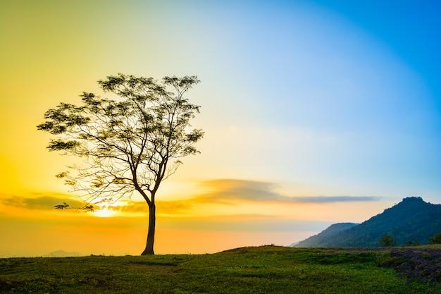 Uma árvore na encosta colina montanha belo nascer do sol com árvore sozinho pôr do sol céu amarelo azul b Foto Premium