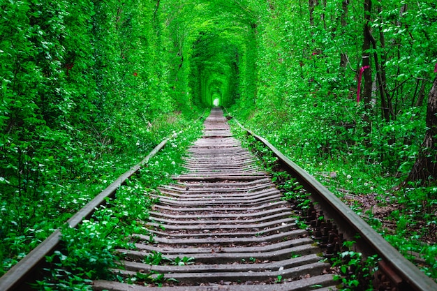 Uma estrada de ferro na primavera floresta túnel do amor Foto Premium