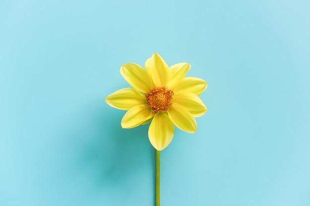 Uma flor amarela natural fresca, close-up. olá conceito primavera, bom dia. Foto Premium