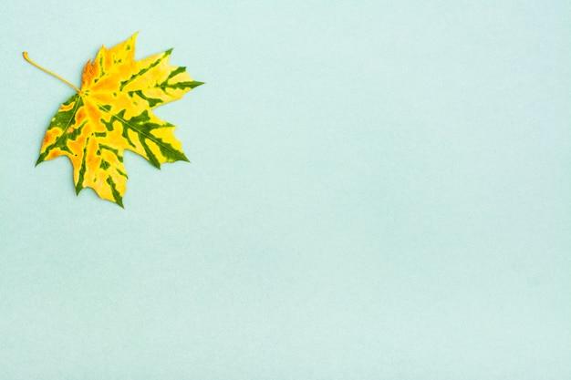 Uma folha de bordo caída mottled yellowgreen bonita em um cartão Foto Premium