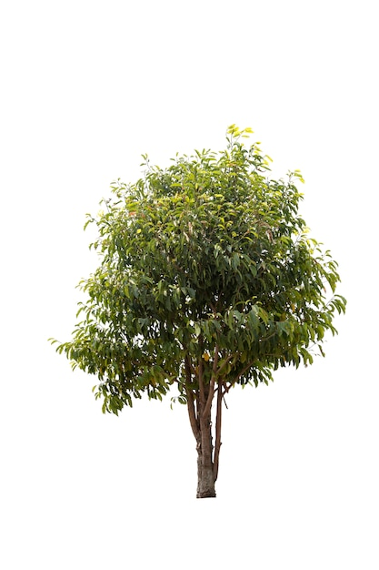 Uma grande árvore isolada Foto Premium