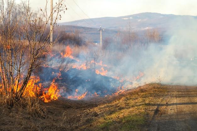 Uma grande chama de fogo destrói grama seca e galhos de árvores ao longo da estrada. Foto Premium