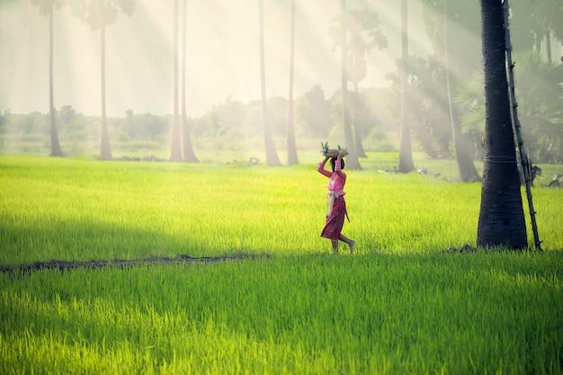 Uma jovem garota em traje nacional indonésio está andando em um campo de arroz colocando uma cesta de frutas na cabeça. Foto Premium