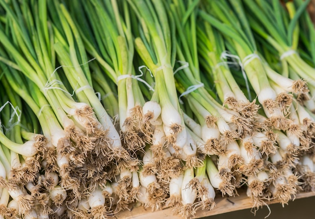 Uma linda linha de cebolas de primavera empacotada com elástico vermelho pronto para venda no mercado. cebolinha. cebola verde mola madura. folhas de cebola verde Foto gratuita