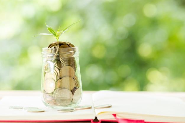 Uma moeda em uma garrafa de vidro com uma pequena árvore Foto gratuita