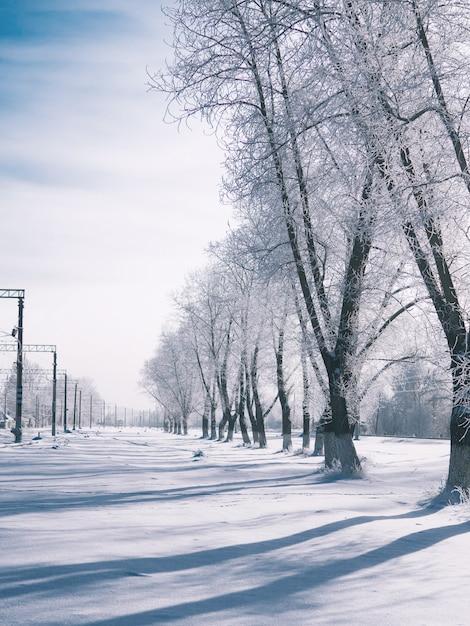Uma paisagem desolada de inverno. manhãs de inverno e as longas sombras das árvores na neve Foto Premium