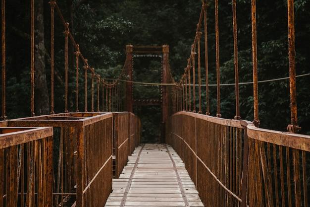 Uma ponte longa passarela dossel em uma floresta Foto gratuita