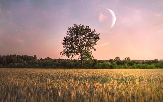 Uma única árvore no campo e uma lua sobre ela Foto gratuita